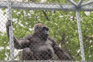 GorillaTreeway_15-937x627